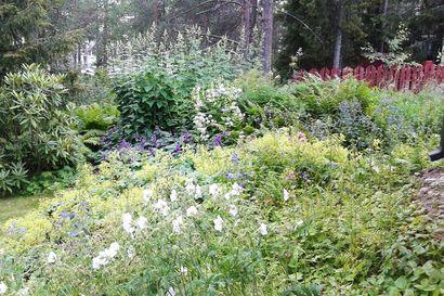Rovaniemellä kaksi puutarhaa avaa porttinsa yleisölle