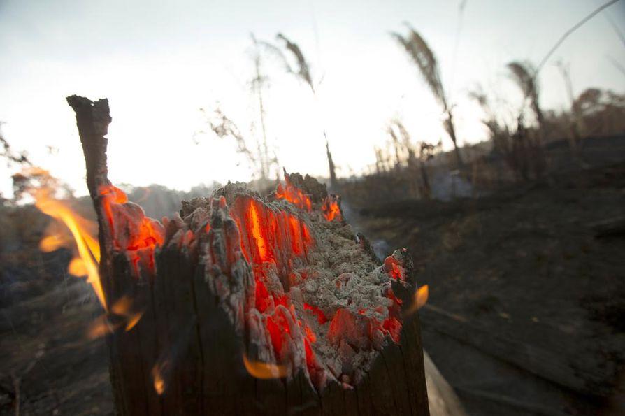 Brasiliasta välittyvät uutiskuvat roihuavista sademetsistä ovat järkyttäneet eri puolilla maapalloa. Kansainvälisen yhteisön pitäisi pystyä toimimaan tilanteessa, jossa laajat metsäpalot uhkaavat mitätöidä ilmastonmuutoksen hillinnän eteen tehdyn työn. EU:n keinovalikoimassa ovat esimerkiksi talouspakotteet.