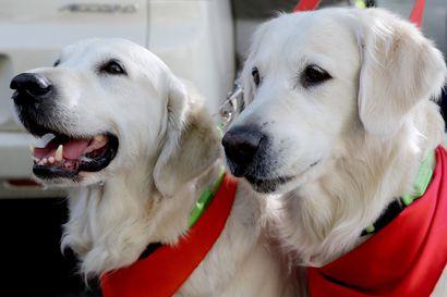 Koiria voi taas viedä ja tuoda Norjasta – sairaustapausten keskittymistä ei ole todettu Suomessa