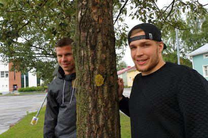 Raahelaiskiekkoilijat eivät pääse vielä samaan ketjuun – Miikka Salomäki aloittanee farmissa