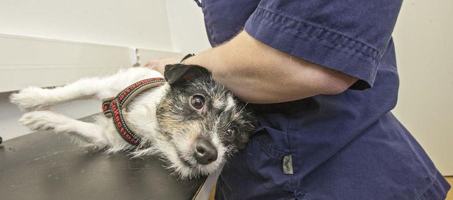 Yhtiön mukaan uuden eläinlääkäriasema Kamun lääkärikunnassa on useita kokeneita tekijöitä. Kuvituskuva.