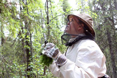 """Rovaniemi ei lämpene Ylitorniolle kaavailluille luonnonsuojelualueille: """"Luontoarvot ovat tärkeitä, mutta pidämme tärkeinä myös talous- ja työllisyysnäkökulmia""""."""