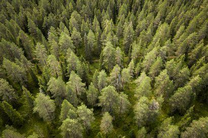 Metsähallituksen suunnitelma 3,4 miljoonalle hehtaarille Lapissa julkistettiin: ytimessä paikallinen elinvoimaisuus ja kestävä biotalous