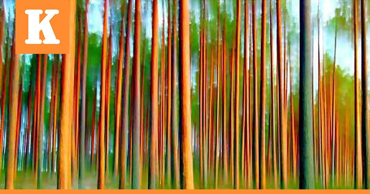 Minun Metsäni