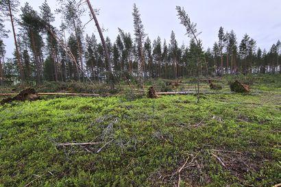Metsänhoidon kalusto kiinni myrskytuhoissa – Kemera-tukia on maksettu metsänomistajille Pohjois-Suomessa elokuun loppuun mennessä 7,7 miljoonaa
