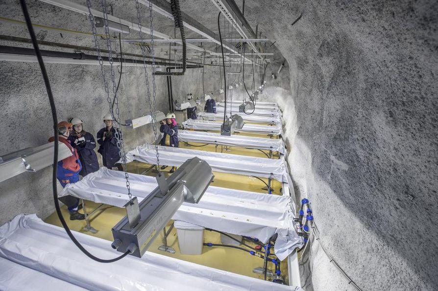 Pyhäjärven kaivoksessa on tutkittu muun muassa perunanviljelyä. Arkistokuva.