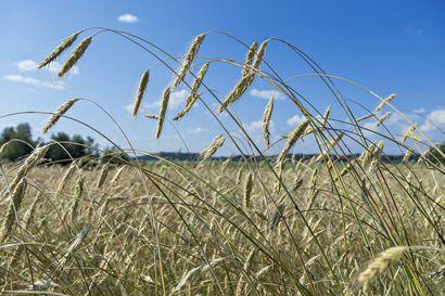 Analyysi: Kaupan omia private label -tuotteita ei tulla kieltämään – ministeri kertoo, kuinka lakiuudistus auttaa viljelijää