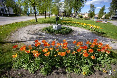 Nyt istutetaan puistoihin muutakin kuin koivuja ja petunioita: kaupungin viherrakentaminen saa kiitosta Raahen Seudun tekstareissa