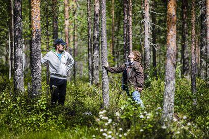Luomukeruualue Siikalatvan kunnan metsiin suunnitteilla