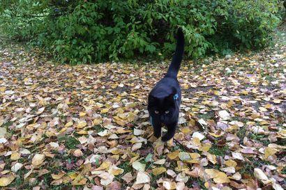 Cockerspanieli värvättiin kissojen löytäjäksi Britanniassa