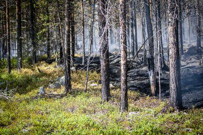 Avotulenteko on yksiselitteisesti kielletty metsäpalovaroituksen aikana – koskee muun muassa kertakäyttögrillejä ja risukeittimiä