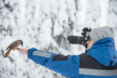"""Enää kotkat eivät parittele - Nyt oravat työntävät ostoskärryjä: """"Välillä tuntuu, että minunkin kuviani kopioidaan"""""""