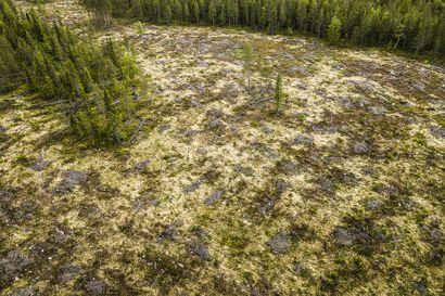 Avohakkuukielto liian ehdoton, väittää Metsäteollisuus – kansalaisaloite menossa eduskuntaan tiistaina