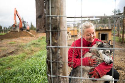 """Husky-yrittäjä tietää, että tunkua alalle ei ole: """"Tämä on niin hullun hommaa"""""""