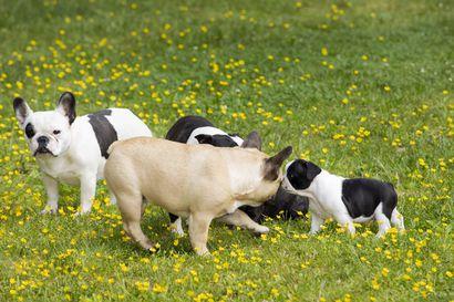 Tuleeko koirista demokratian mittari? Tieteen ja tutkimuksen vapaus on tärkeä perusoikeus, jonka rajoittaminen on vaarallinen tie