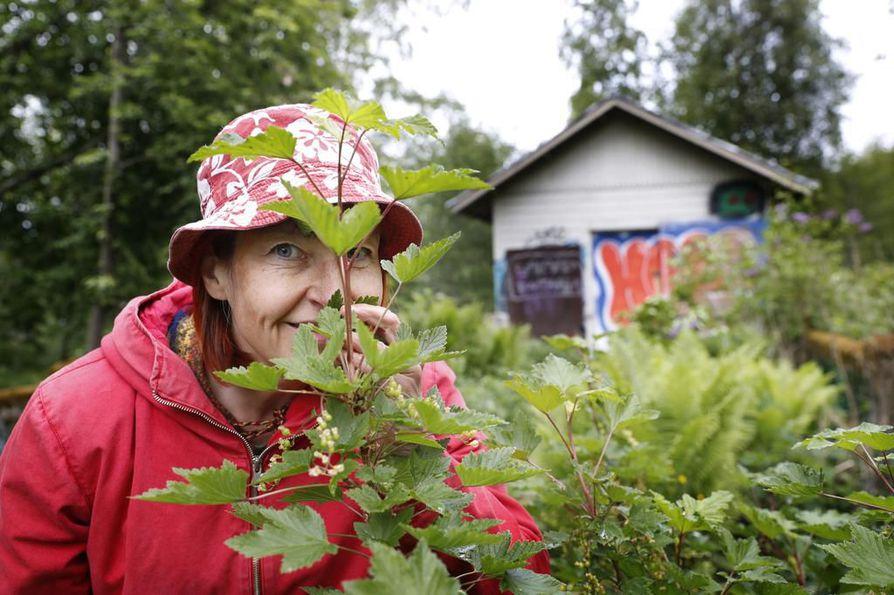 Annikka Kujala piipahti Ainolan puistossa, löysi ja tunnisti toistakymmentä syötävää villiyrttiä. Kasvien tunnistamisessa voi käyttää hyväksi myös hajuaistia.
