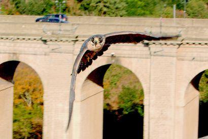 Arvio: Tietomaan uusi jättielokuva näyttää, miten eläimet ovat oppineet lentämään