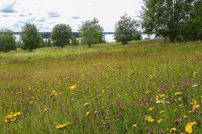 Taivalkosken Tyrävaaran niityt palkittiin Pohjois-Pohjanmaan Vuoden maisematekona