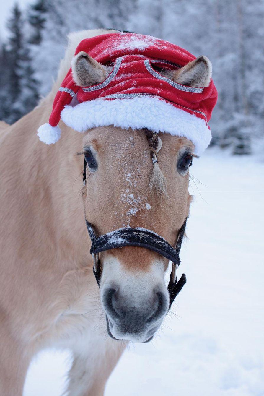 Blondi joulumielellä toi lukijoille mieleen joulun rekiretket.