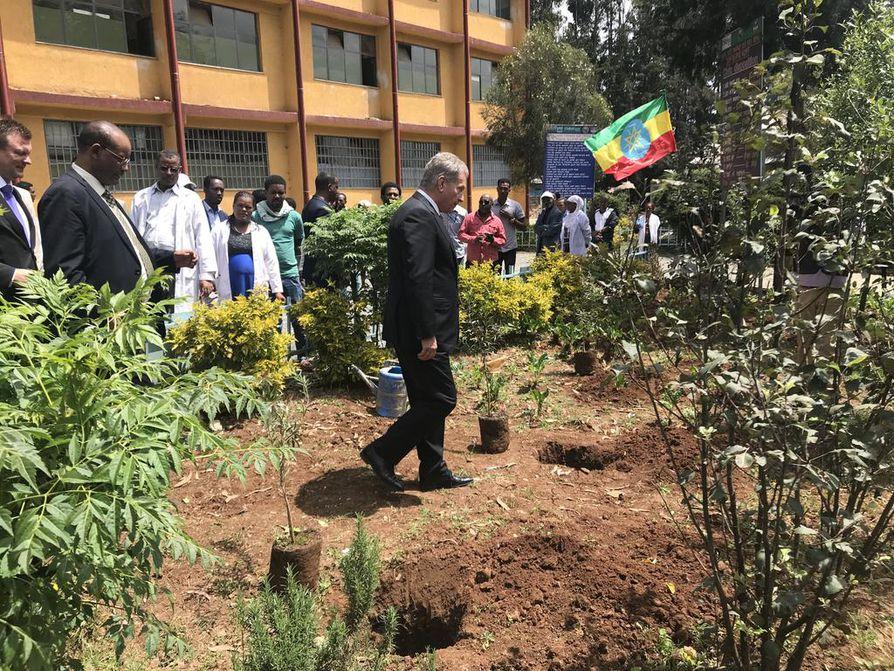 Presidentti Sauli Niinistö asteli istuttamaan puuntaimen etiopialaisen koulun pihaan.