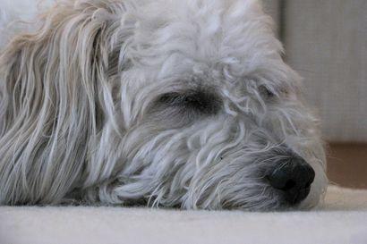 Eikö lemmikkisi välitä enää lempilelustaan ja nukkuuko se paljon? Taustalla voivat olla vanhuuteen liittyvät vaivat, jotka tarvitsevat hoitoa