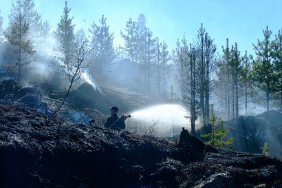 """Lukijalta: Metsäpalo ei ole luonnon katastrofi –""""Todellinen katastrofiuutinen on se, että Suomen metsien monimuotoisuus on yhä kaventunut"""""""