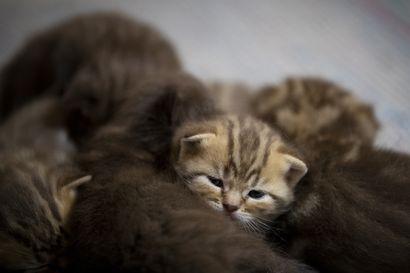 Lemmikkien omistajille