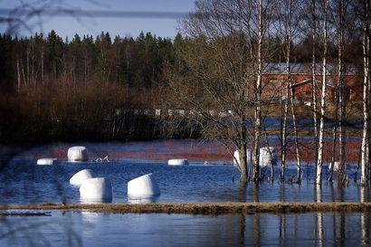 Ely-keskus: Varoitukset Iijoen ja Kuivajoen suurista tulvista edelleen voimassa, Iijoen tulvahuippua odotetaan toukokuun lopulla