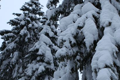 Raportti: Etelä-Suomessa lunta ja pakkasia esiintyy jatkossa yhä harvemmin, pohjoisessa lumimäärä voi jopa lisääntyä