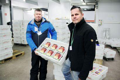 Lihan hankinta muuttuu Lapissa: Veljekset Rönkä lopettaa naudan ostamisen suoraan tuottajilta, Atria toimittaa sille jatkossa kaiken naudan