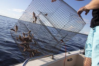 Kalastaja, muista maksaa kalastonhoitomaksu ennen kalastuskauden alkua – kalastonhoitomaksujen kysyntä ollut koronapandemian aikaan korkea