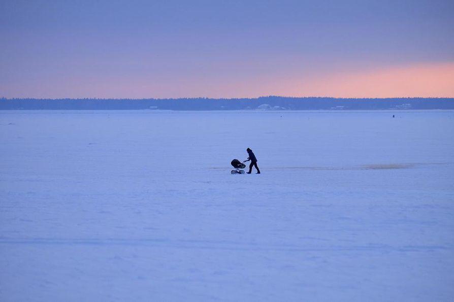 3. palkinto. Marcos Katz antoi Nallikarissa viime talvena 10. helmikuuta otetulle kuvalleen nimeksi Sisua.