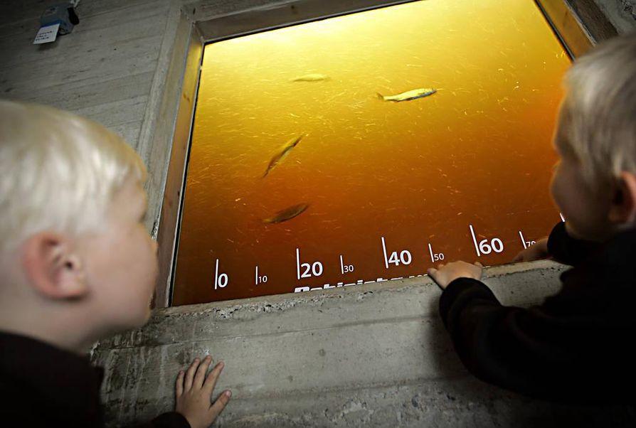 Yleisö pääsee tarkkailemaan kaloja  elokuussa.