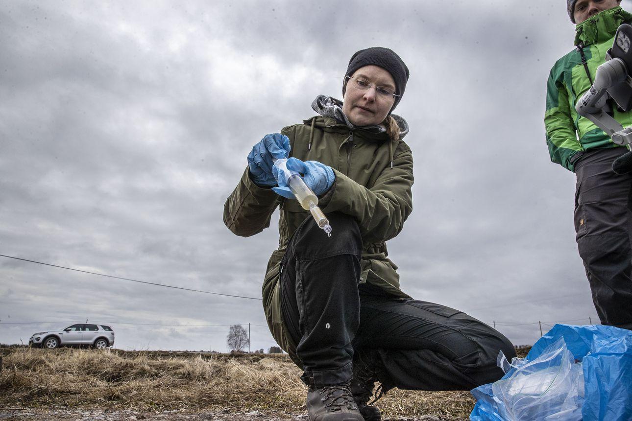 Vesistöistä etsitään kiljuhanhen dna:ta – Oulun yliopiston tutkija Johanna Honka ottaa ympäristö-dna-näytteen