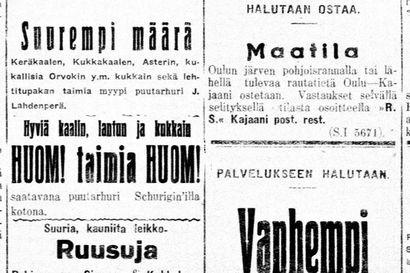 Vanha Kaleva: Englantilaisia toimittajia vierailee Oulussa – Muhokselta Ouluun höyrylaivalla