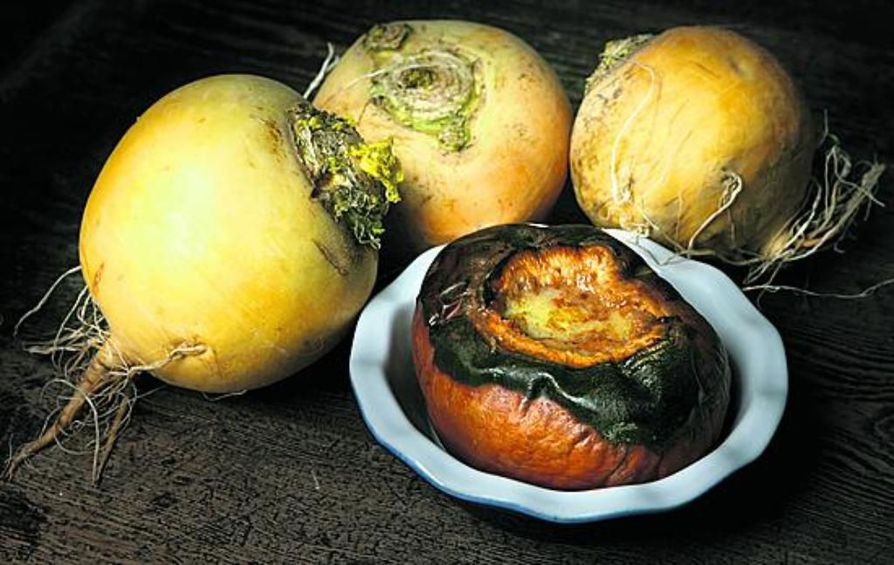 Nauris on hyvä vanhan ajan makea herkku, josta syntyy helposti alku- ja pääruokaa syksyiseen ruokapöytään.