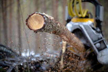 Harvennuksista puuta energiakäyttöön – Pienpuusta valmistettavan metsähakkeen kysyntä kasvaa voimakkaasti lähivuosina, kun turpeen energiakäytöstä luovutaan