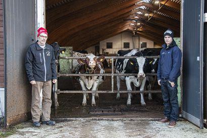 """Maitotilalla tehdään ympäri vuoden pitkää päivää koko perheen voimin – """"Olisi ollut vaikea tehdä jotain muuta"""""""