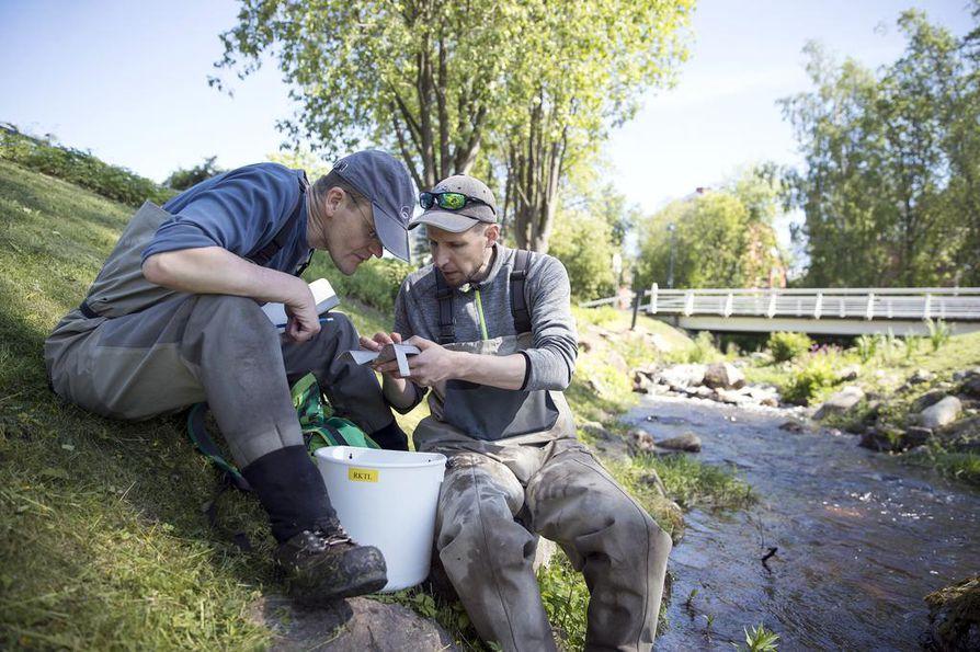Tutkimusprofessori Jaakko Erkinaro ja tutkija Panu Orell mittasivat sähkökalastusmenetelmällä kiinniotettuja kalan poikasia.