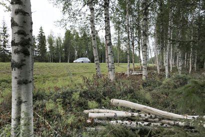 Lapin teiden varsilta raivataan ja harvennetaan puustoa kilometritolkulla – Näkyvyys paranee muun muassa valtatie 21:llä