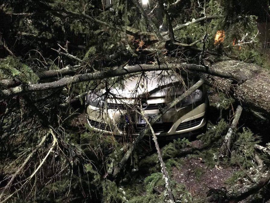 Kova tuuli kaatoi 10. päivä helmikuuta valtavan kuusen Varsinais-Suomen Kaarinassa asuvan perheen auton päälle. Perhe jäi ilman korvauksia, sillä autossa ei ollut kaskoa.