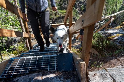 Hiidenportin kansallispuiston rotkon kautta kulkevat portaat uusittiin – kunnostustyöt jatkuvat myös pitkospuiden parissa