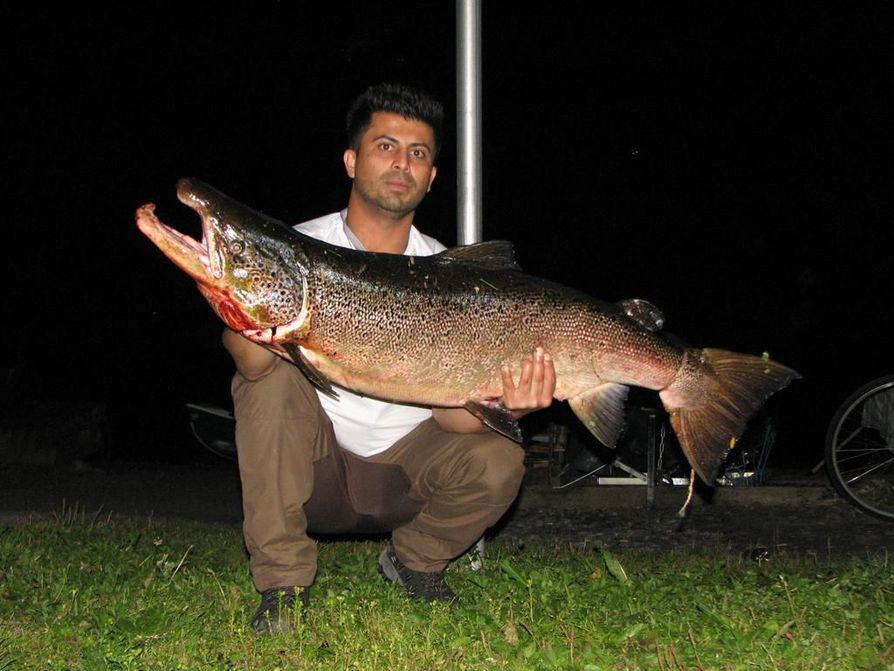 Kalevan lukija lähetti kuvan Azad Suleimanin kalastamasta jättilohesta.