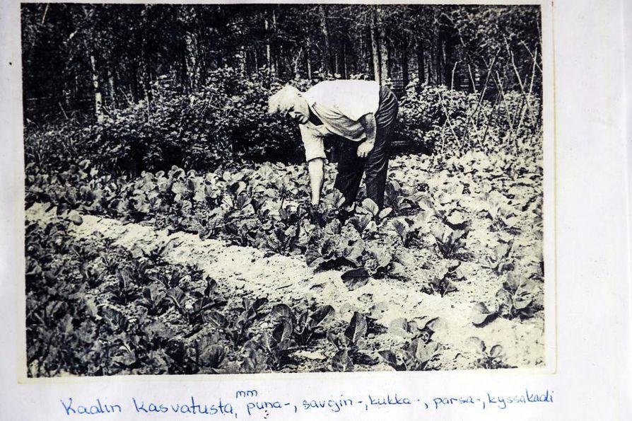 Paavo von Pandy viljeli lukemattomia lajeja, joita Inarin korkeudella ei ollut edes nähty. Pelkästään kaaleja oli puolenkymmentä eri lajia.