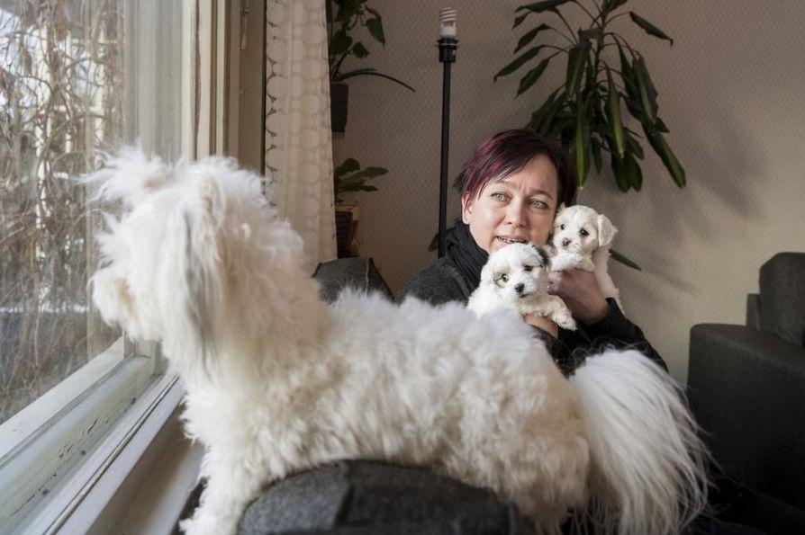 Essi Valle on erittäin allerginen, mutta coton de tuléar  -koirarotu sopii hänelle. Niitä hänellä on viisi. Viisiviikkoiset pennut Hiltonin Hilda ja Hulda saavat vapaasti nuolla vaikka hänen kasvojaan.