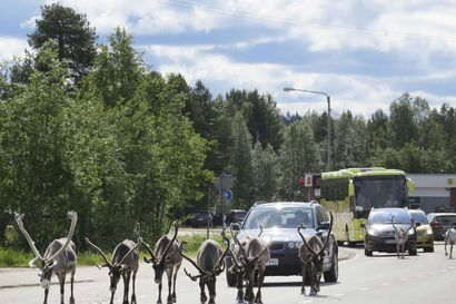 """Lapissa odotetaan Norjan rajan aukeamista ja ollaan toiveikkaalla mielellä  –  """"Korona ei ole maailmanloppu"""""""