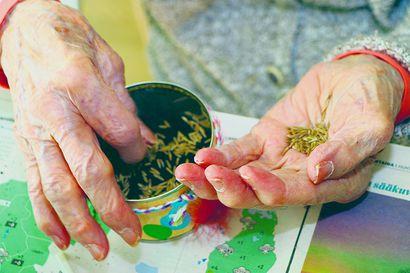 Uusi tapa lievittää vanhusten yksinäisyyttä: Siikajokiset vanhukset saavat heidän kotonaan kiertävän kaverin
