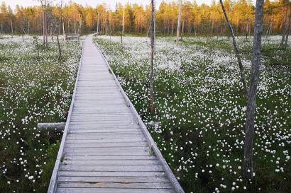 Ounasvaaralle tehdään Suomen pisin taidenäyttelypolku – Näyttelylle tavoitellaan kilometrin pituutta