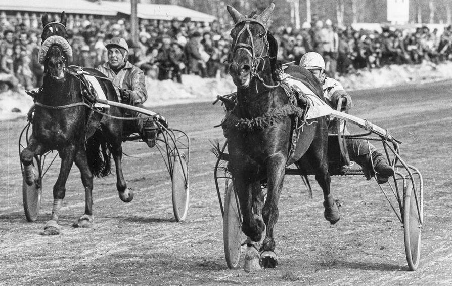1977: Otvel/Aleksanteri Flink ja Kober/Lauri Alasuutari Tornion radalla.
