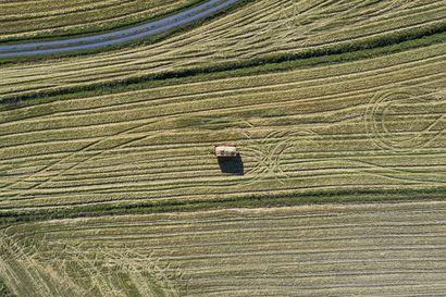 """Pohjois-Pohjanmaan rooli Suomen suurimpana naudanlihan ja maidon tuottajamaakuntana näkyy päästötilastoissa – """"On hedelmällisempää etsiä ratkaisuja kuin syyllisiä"""""""